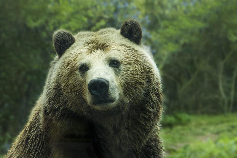 Το αρκουδάκι