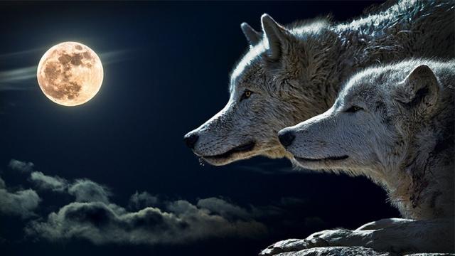 Ο Σιωπηλός Λύκος