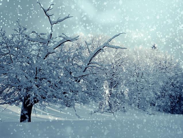 Η πεταλούδα και το χιόνι