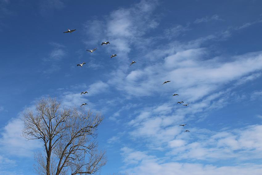 Στη Φύση, παρατηρώντας πουλιά …και όχι μόνο!