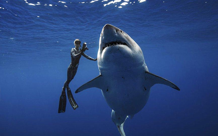 Ο ομογενής που δαμάζει τους καρχαρίες στο Λονγκ Αϊλαντ
