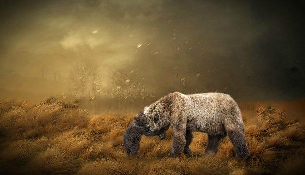 Η μαμά αρκουδίτσα